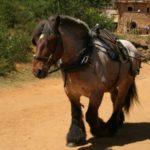 Un cheval de Guédelon