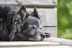Dormir en hébergement insolite avec un chien